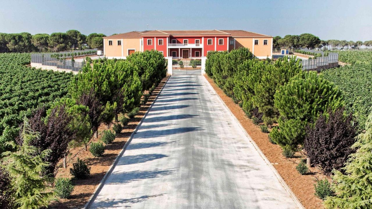 Los viñedos de Dominio de Punctum en Cuenca